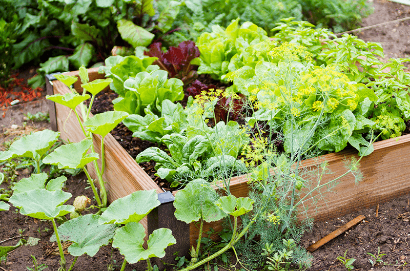 Vegetable Garden Success & Planting Annuals for Color