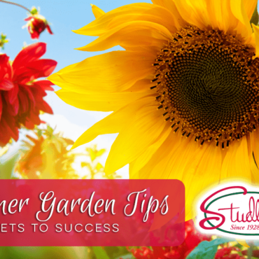 Summer Garden Tips | 5 Secrets To Success