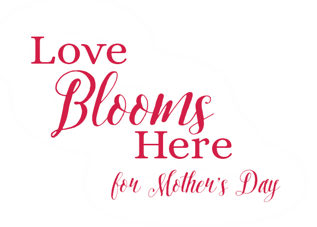 Mother's Day Flowers By Studleys